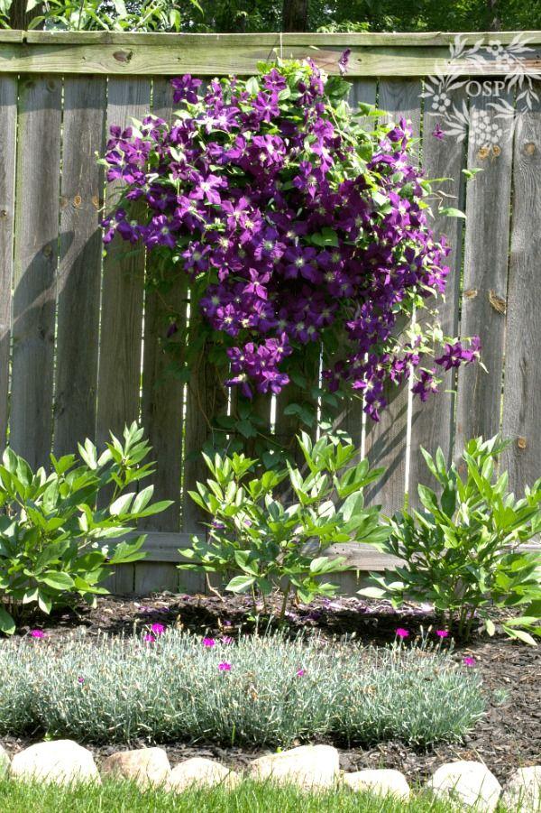 10 Best Hardy Maintenance Free Perennials !