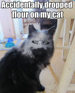 30 Of The Best Funny Animal Pictures