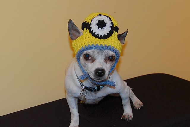 Free Crochet Patterns For Dog Halloween Costumes : 1000+ images about Stuff for critters on Pinterest ...
