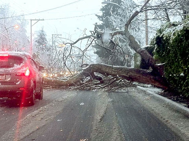 Snow created a few hazards with fallen trees in Richmond. A tree fell across No. 2 Road blocking traffic between Granville Road and Blundell Road and another tree was uprooted at the Richmond Cultural Centre landing on top of the Minoru statue.
