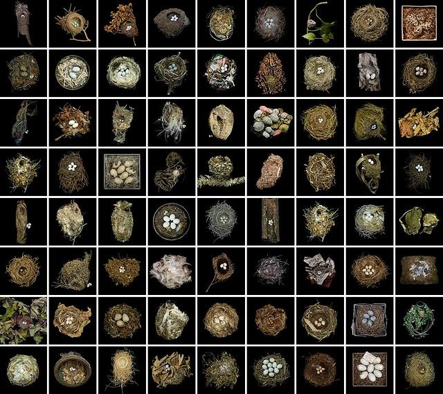 Sharon Beal's series of birds nests