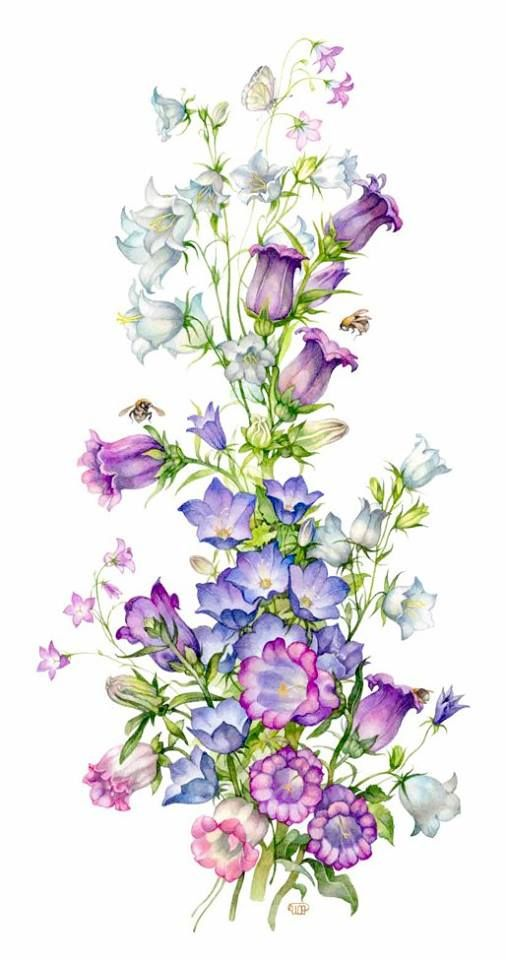 Русское общество любителей ботанической иллюстрации