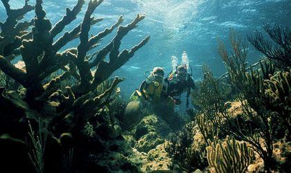 Nassau, Bahamas: Nassau Paradis Islands, Galleries, Nassau Bahama, Favorite Places, Scubas Diving, My Girlfriends, Girlfriends Snorkeling, Honeymoons, The Bahama