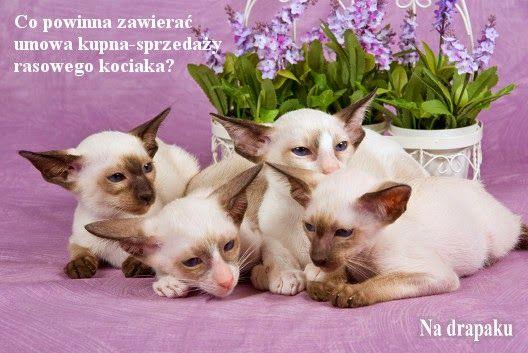 Umowa kupna-sprzedaży kota rasowego