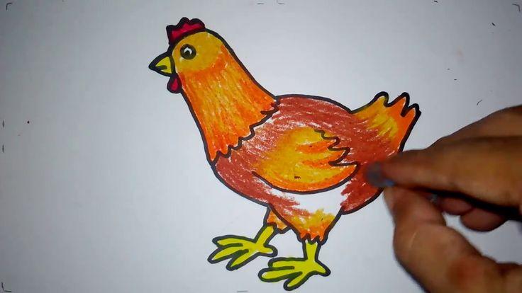 kumpulan 17 mewarnai gambar ayam jantan dan betina
