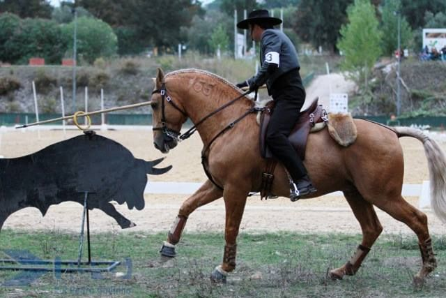 17 Best Images About Working Equitation Obstacles On