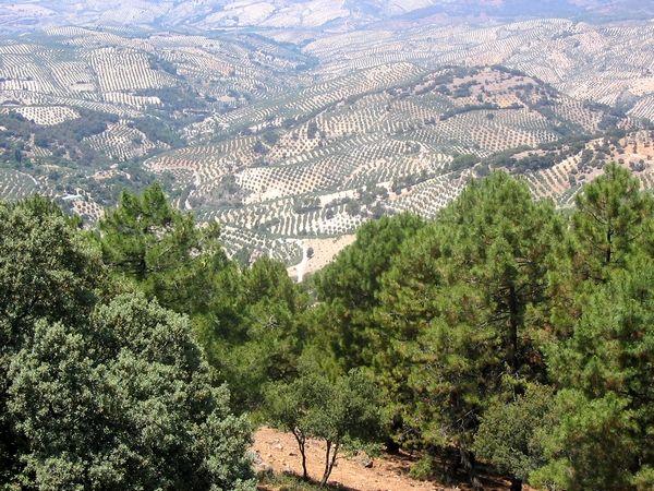 Veel mensen kennen Andalusië van de kleine witgekalkte dorpjes en de steden Cordoba, Sevilla en Granada. Maar er is zoveel meer te beleven. De regio is heel erg afwisselend qua landschap. Je hebt er zandstranden en rustige baaitjes, de Sierra Nevada met de hoogste bergtoppen van het Spaanse vasteland en prachtige bosrijke gebieden. Moerassen in het Parque Nacional de Doñana en de bijzondere rotsformaties van Torcal de Antequera. Zelfs een woestijnlandschap ontbreekt er niet.