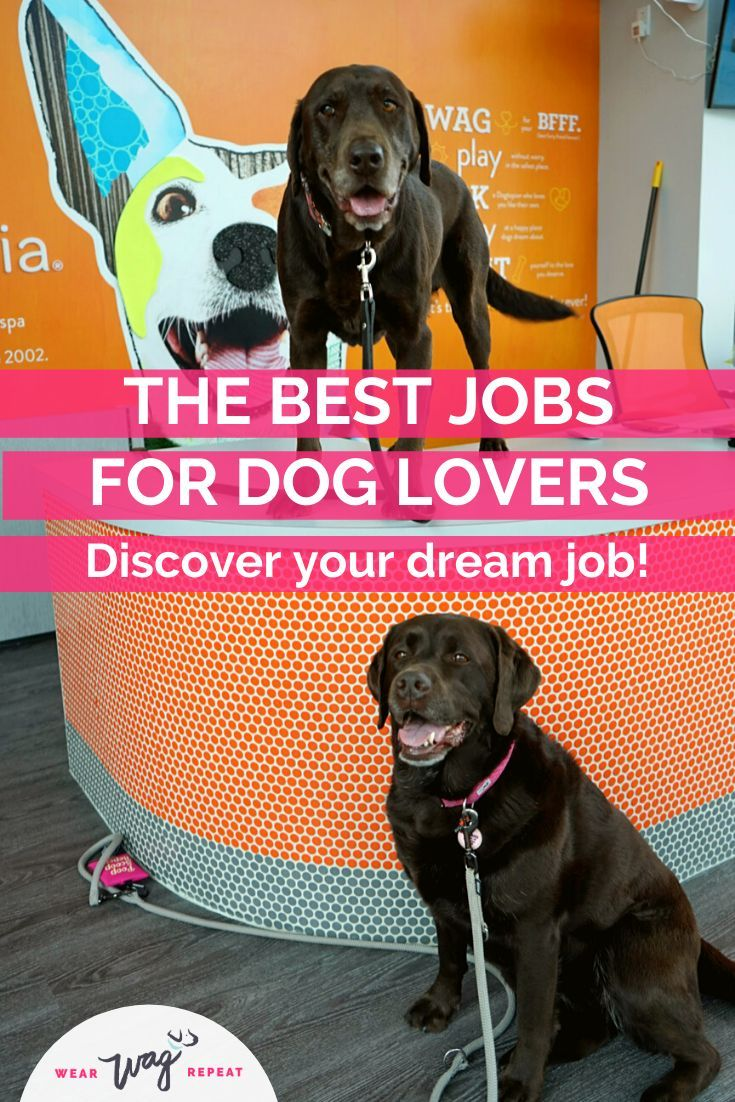 The Best Jobs For Dog Lovers In 2020 Dog Lovers Dogs Dog
