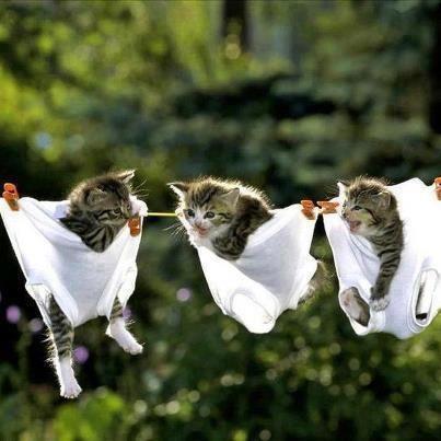 *Katte<3Vask* ^^ gEsAnd
