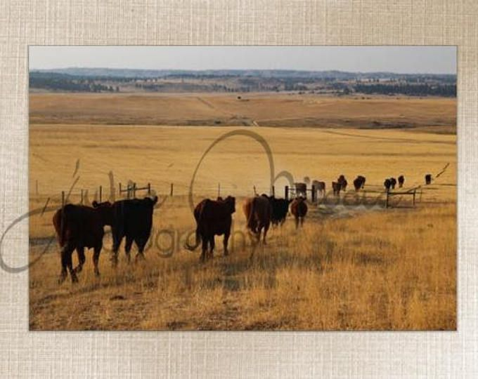 Montana Western Cattle - Wall Art Decor - Fine Art Photography Canvas Gallery Wrap - Country Cows Gold Nature Fall Hay Rustic Nature