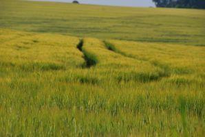 Green field II by black-ladybird