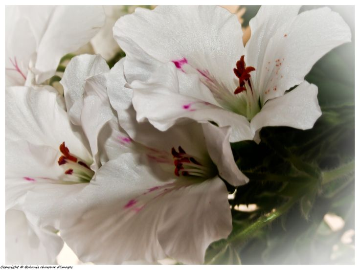 Flore (49)