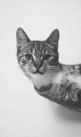 Cat, bw, black and white