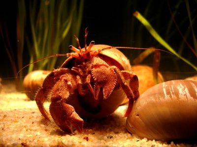 How to Make a Climbing Net for Hermit Crabs-- feelin like Brucie would dig this.