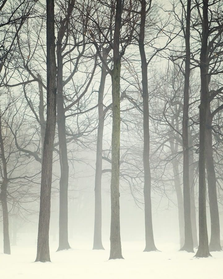 two of my favorite types of weather snow and fog. These are amazing. via enhabiten