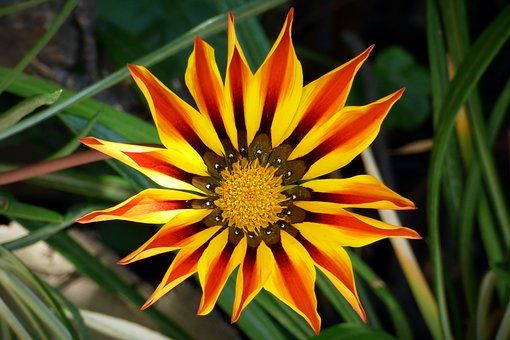Λουλούδι, Πέταλα, Χρώμα, Φύση