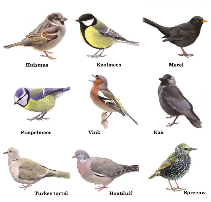 tuinvogels-Metnaam