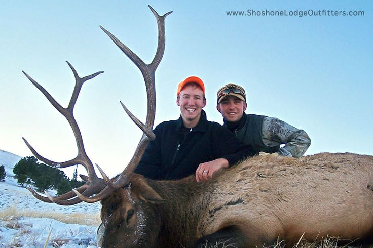 Guided Elk Hunts by Shoshone Lodge Outfitters, Cody WY near Yellowstone Park
