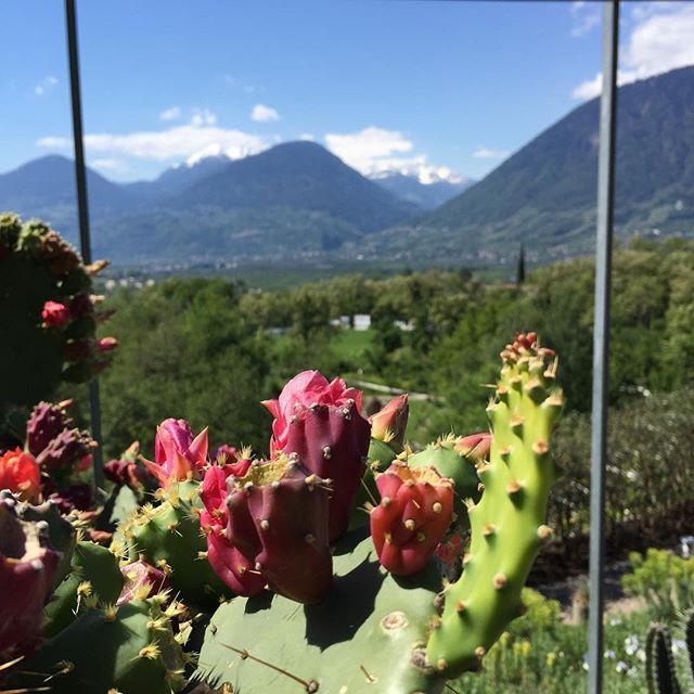 We had a great day in Merano today, after reading an article from @lilies_diary last week we got inspired to use the long weekend for a trip exploring this area and got welcomed with splending weather ☀️☀️ ( after driving through a snowstorm to get here ) Happy Weekend! #weekend #italy #vegantravel #vegantraveler