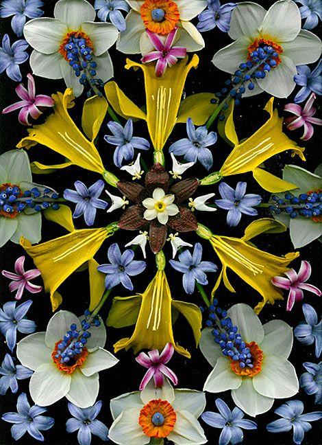 cocoroachchanel:    fritilaria, 2004, portia munson