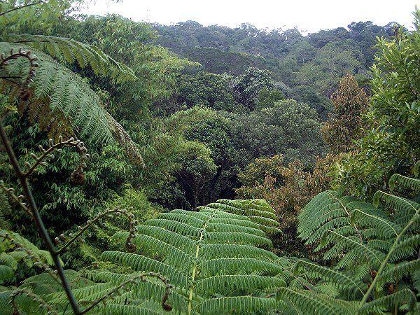 tropischer Regenwald wurde in Malaysia, Kuching aufgenommen und hat folgende Stichwörter: Urwald, Malaysia, Regenwald.