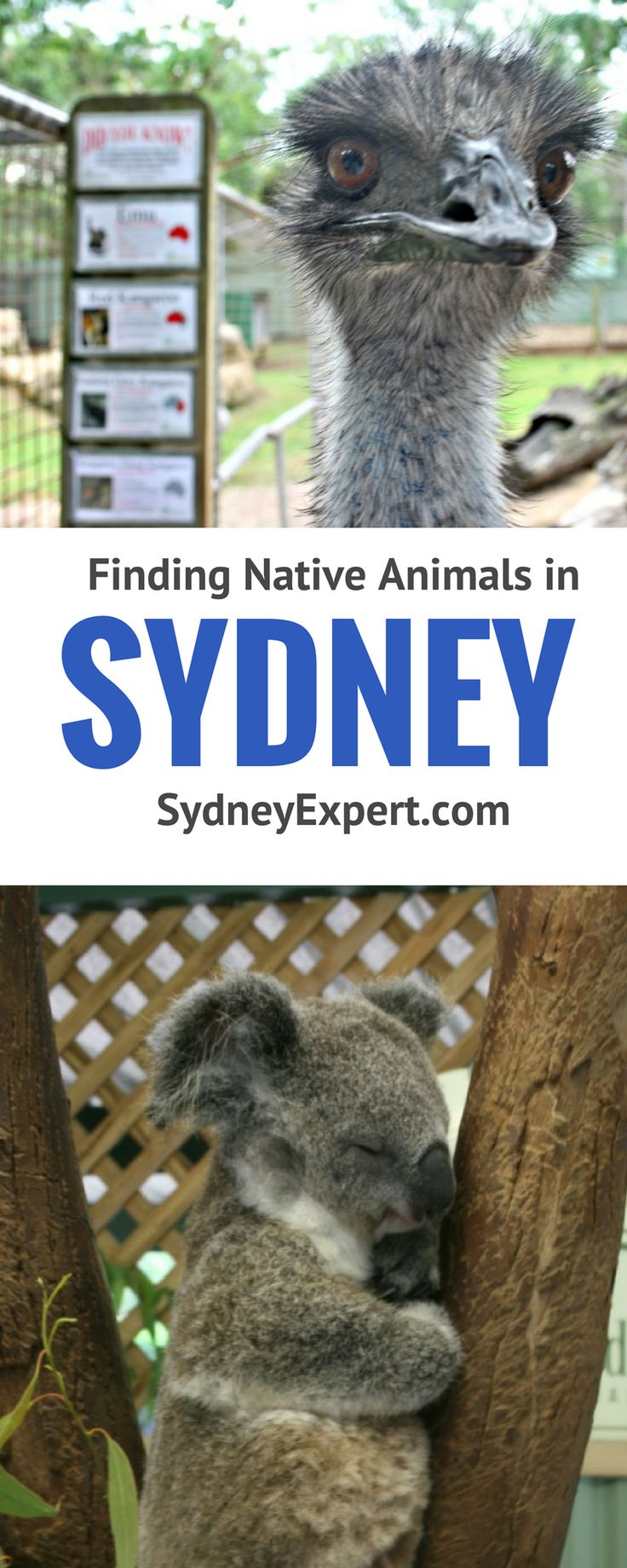 where to see native animals in Sydney