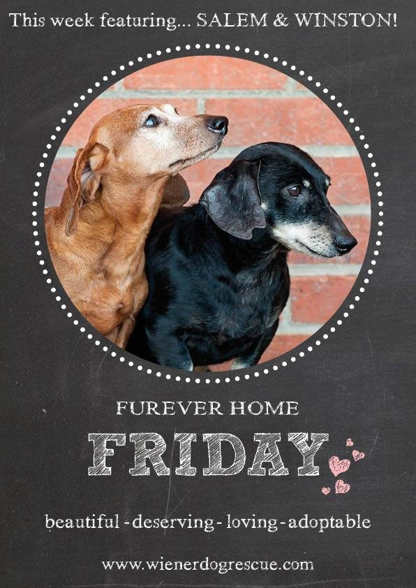 Bonded pair Salem and Winston are in our Furever Home Friday Spotlight ...