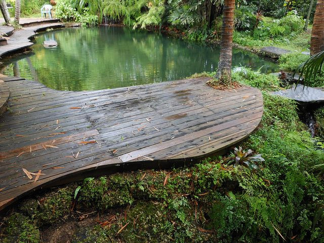 Yan's pond an all natural swimming pool in miami