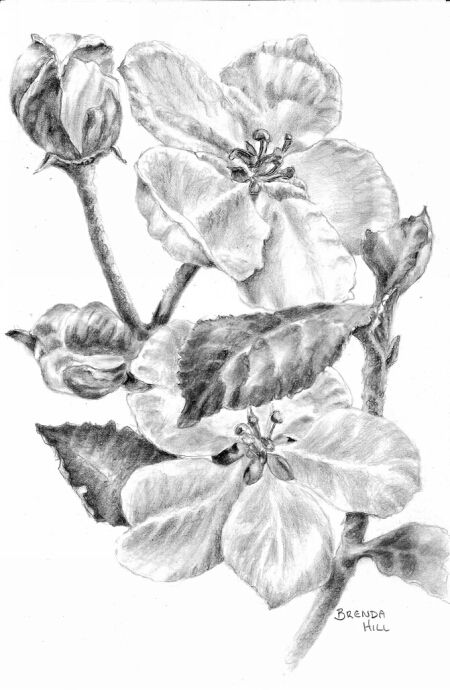 Buddies graphite floral botanical By Brenda Hill