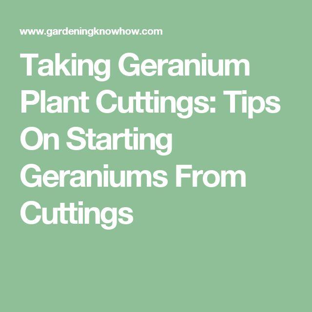 25 b sta geranium plant id erna p pinterest pelargoner k rl blommor och blommor tr dg rd - Overwintering geraniums tips ...