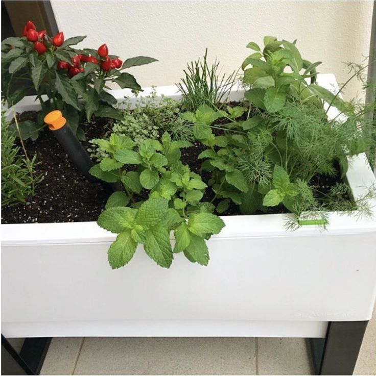 The start of a beautiful relationship indeed @lyndaking! Hope your new planter partner brings you and your apartment all the happiness you deserve <3   . . . #selfwatering #selfwateringplanter #balconyplanter #glowpearplanter #summerplanting #whattoplant #greenwall #growvertically #verticalgarden #smallspacegardening #growyourown #locallygrownfood #ediblegardening #urbangardening #greenthumb #permaculture #goinggreen #foodisfree