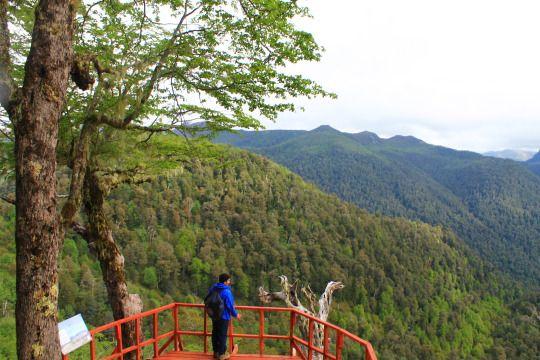 Reserva Nacional Mocho Choshuenco, Región de los Ríos - Chile