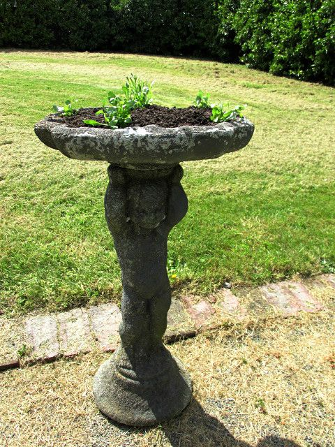 Planted an old bird bath with cascading Lobelia.