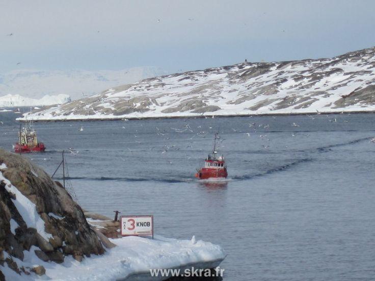 Bateaux de pêche rentrant au port suivi par les mouettes, Groenland