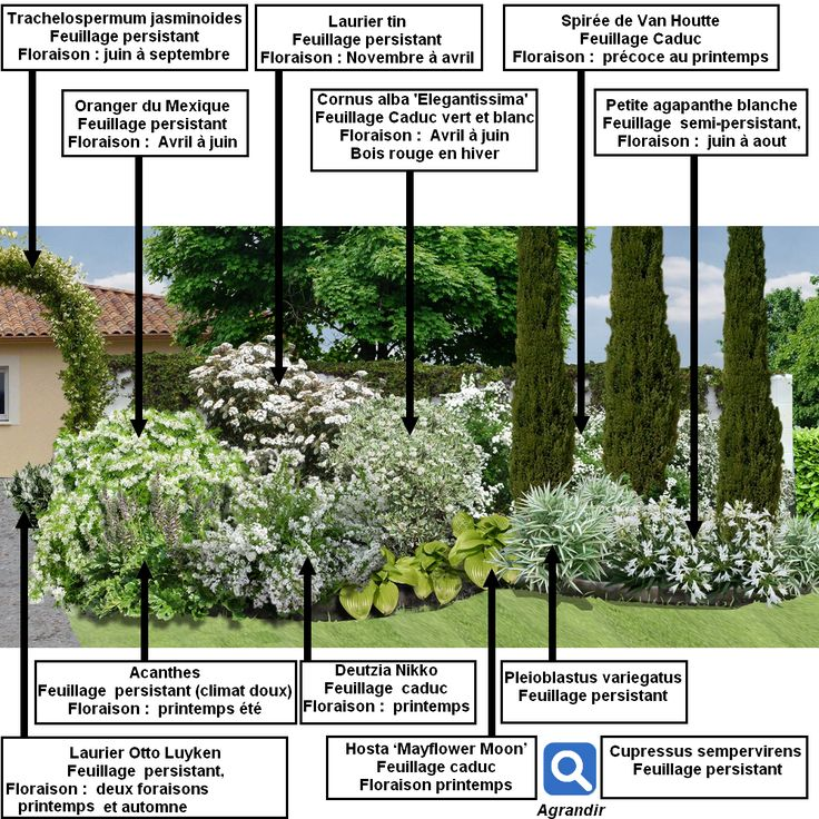 plan patron du massif d'arbustes vert et blanc.png (1000×1000)
