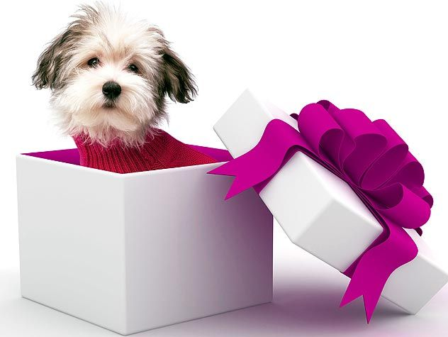 Do you want to give a pet as a present? Check out some of these things to consider to make sure this is the right option for you and your family