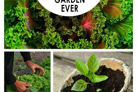 16 Hacks for the Best Vegetable Garden Ever