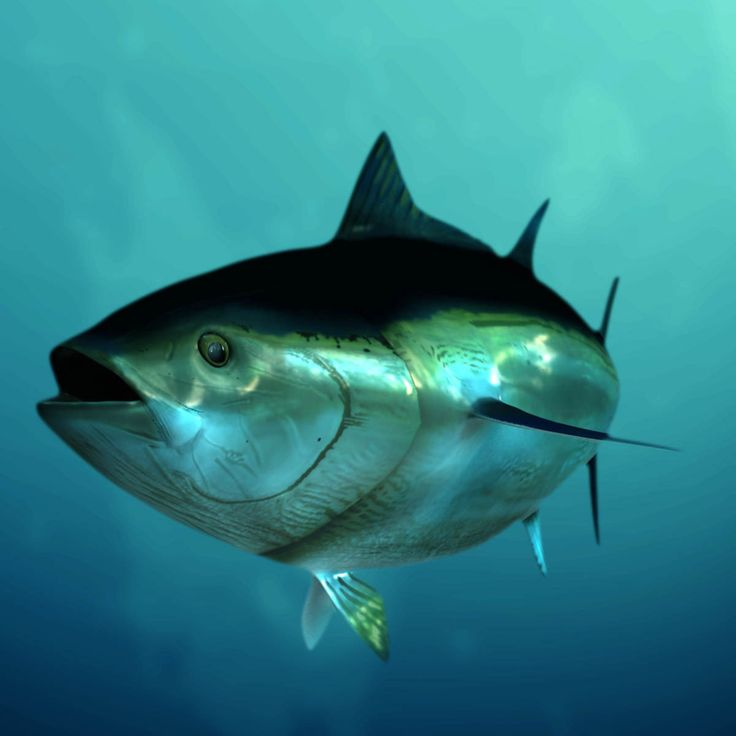 28 best images about big game fishing on pinterest for Tuna fishing video