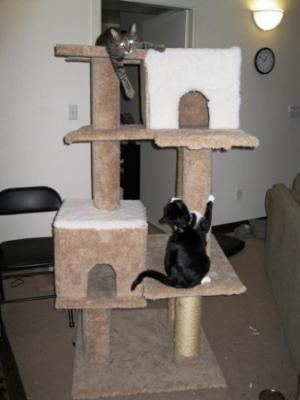 This is a guide about making your own cat tree. Cat trees provide a great place for your cats to hang out, sleep and play.  Even smaller cat trees can be very expensive.