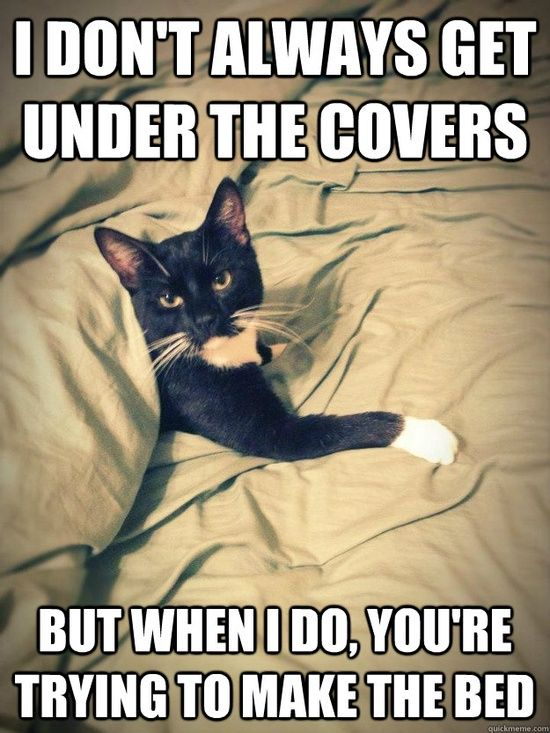 My cat seriously does this every freaking time LOL