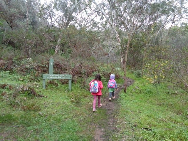 How to Introduce Bushwalking to Kids in Adelaide