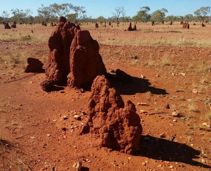 Termite mounds,  Mount Isa.