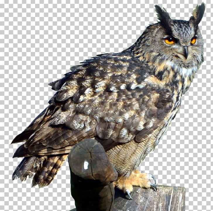 Eurasian Eagle Owl Great Horned Owl Png Animals Barn Owl Barred Owl Beak Bird Eurasian Eagle Owl Owl Png Great Horned Owl