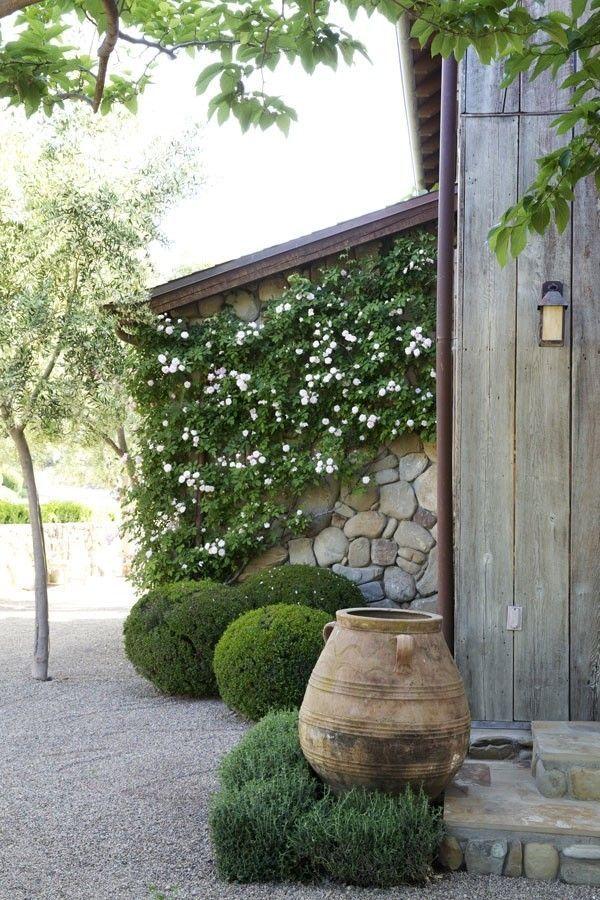 Terracotta garden urn and boxwood plants