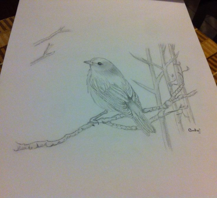 Bird cute!
