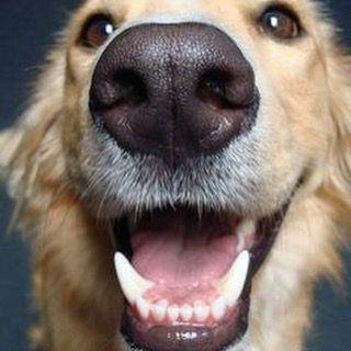 puppyteethingtoys Puppyteethingtoys.com  #puppy #puppys #puppydog