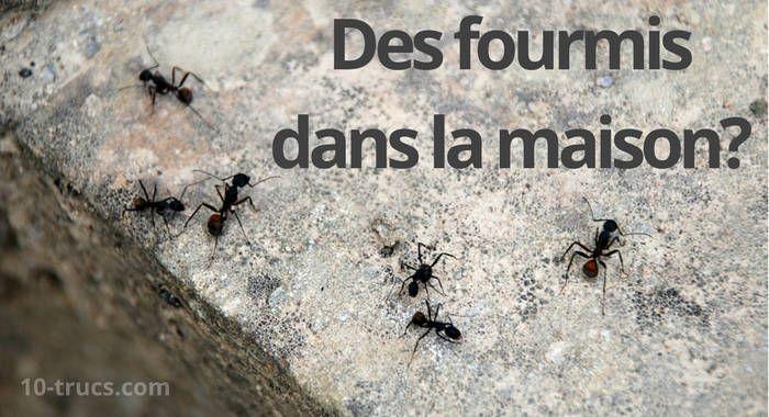 Les 168 meilleures images propos de animal insecte sur - Eliminer les cafards ...