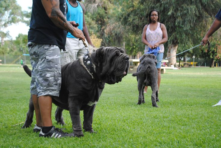 2014 Bark in the Park