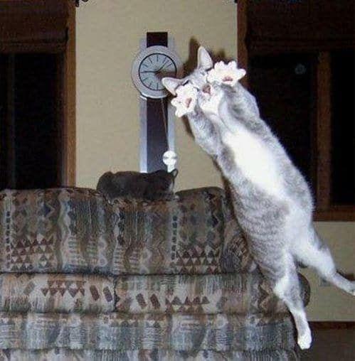 Por qué es importante: porque dentro de diez segundos el gato de encima del sofá va a decir: '¡No es mi sangre! ¡No soy yo! ¡Espera! ¡Él es mi guardaespaldas! ¡Busca ayuda! ¡Quédate conmigo, Frank! ¡Quédate conmigo!', y nosotros vamos a lloriquear como bebés.