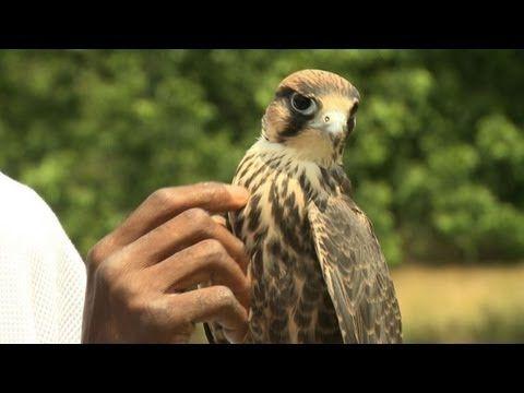 Rodney utiliza las aves para alejar a los jóvenes de la violencia